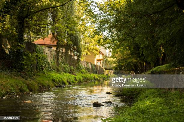 view of river passing through forest - water's edge stock pictures, royalty-free photos & images
