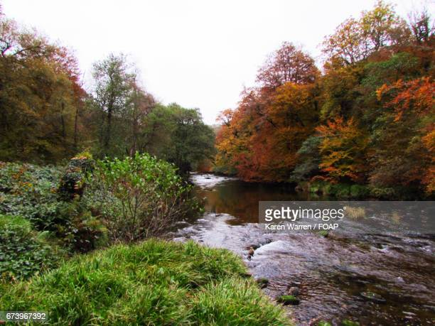 View of river with trees in autumn