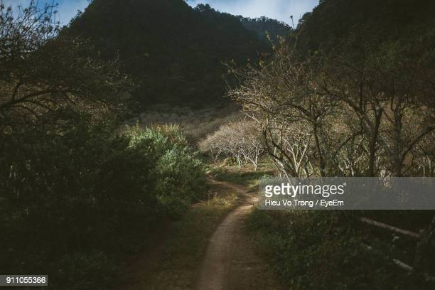 view of road in forest - son la stock pictures, royalty-free photos & images