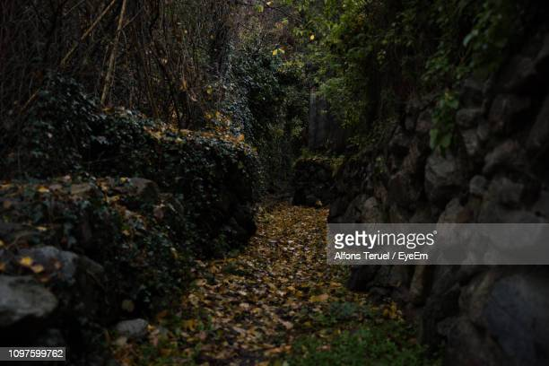view of rocks in forest - andorra la vella stock pictures, royalty-free photos & images