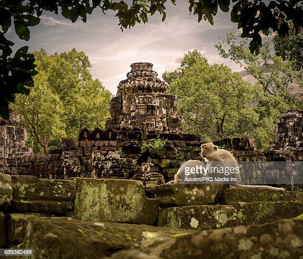 view of ruins and jungle forest, monkeys playing - angkor stock photos and pictures