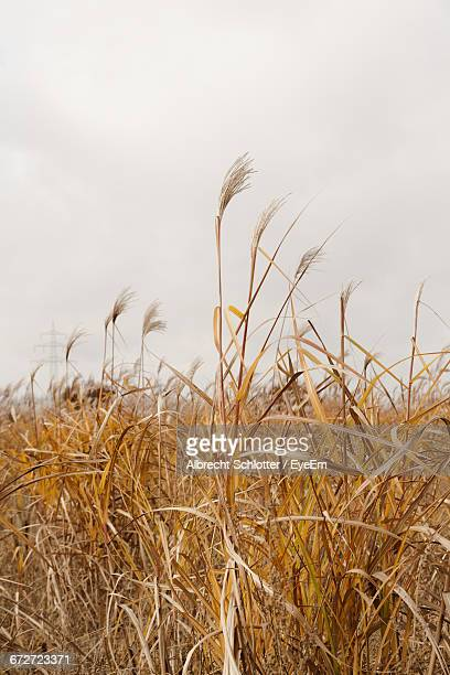 view of rural landscape - albrecht schlotter stock photos and pictures