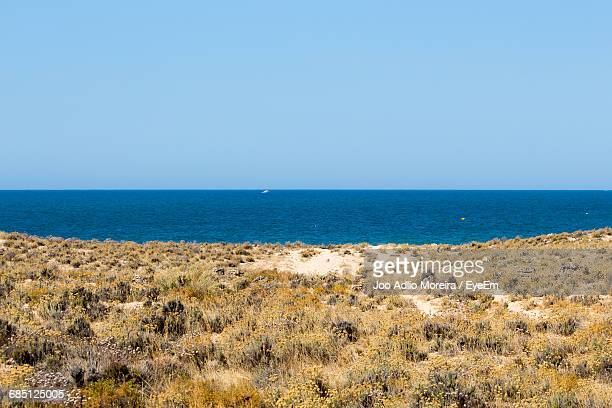 view of sandy beach with calm blue ocean against clear sky - ワイドショット ストックフォトと画像