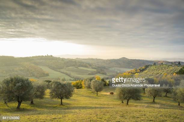 view of sant'appiano hills - olive tree stock pictures, royalty-free photos & images