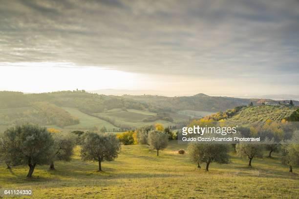view of sant'appiano hills - オリーブ ストックフォトと画像