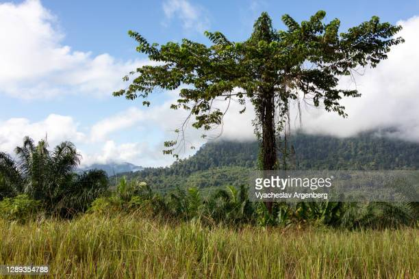 view of sapulut river valley, borneo - argenberg stock pictures, royalty-free photos & images