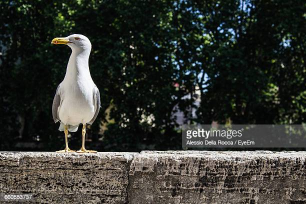 View Of Seagull On Concrete Wall