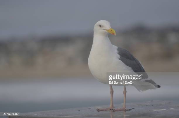 view of seagull perching - bec photos et images de collection