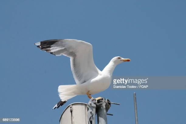 View of seagull