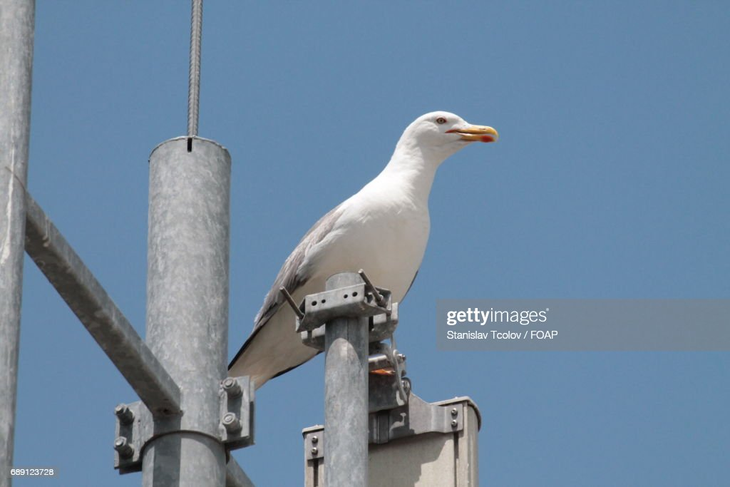 View of seagull : Stock Photo