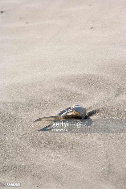 View of seagull skull lying on windswept sand on beach