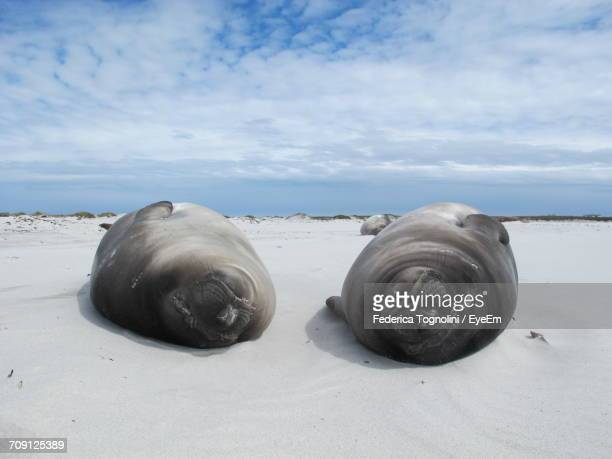 View Of Seals On Beach Against Sky