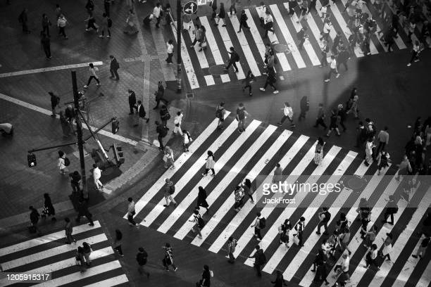 tokyo, japan - october 23, 2019: view of shibuya crossing from above. shibuya crossing is one of the busiest crosswalks in the world. - crossing stock pictures, royalty-free photos & images