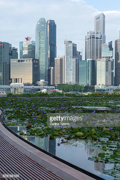 view of singapore's central business district with purple flowering lotuses in the foreground - wasserpflanze stock-fotos und bilder