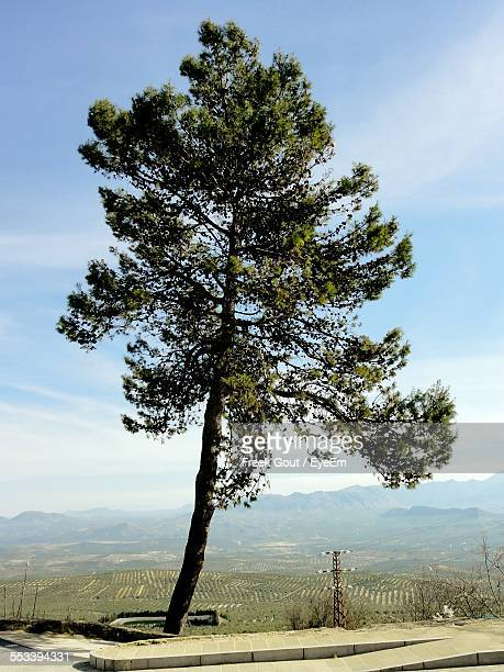 View Of Single Tree On Hill