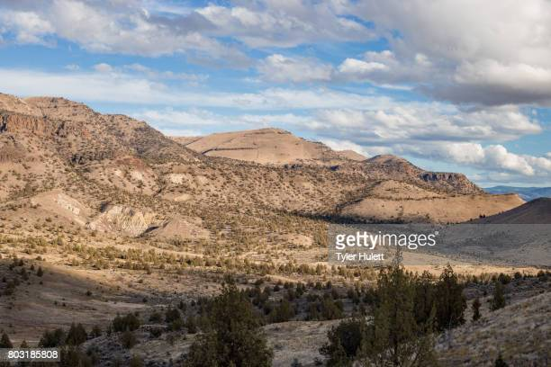 view of slopes of a desert mountain - western juniper tree stock pictures, royalty-free photos & images