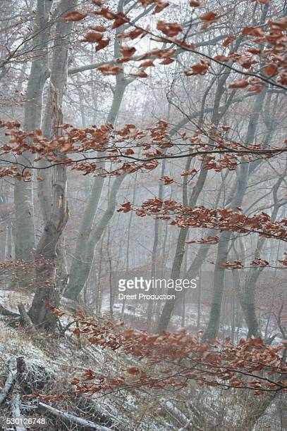View of snow covered forest in autumn
