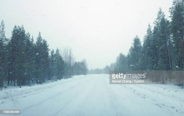 View Of Snow Covered Road In Forest