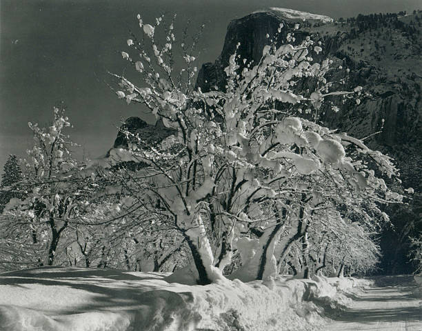 'Half Dome, Apple Orchard, Yosemite'