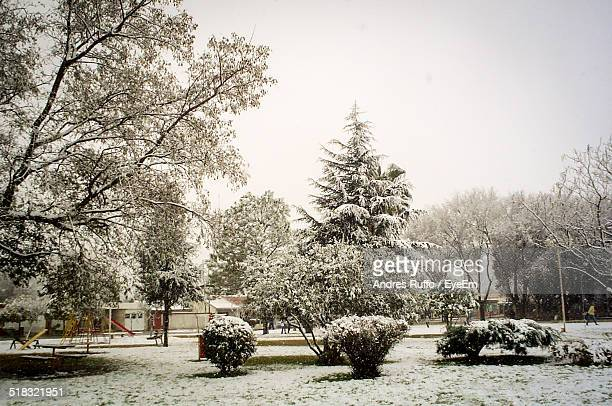 view of snowed trees in the park - andres ruffo bildbanksfoton och bilder