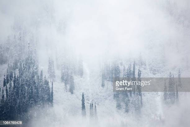 view of snowfall in foggy forest. - snowing stock pictures, royalty-free photos & images