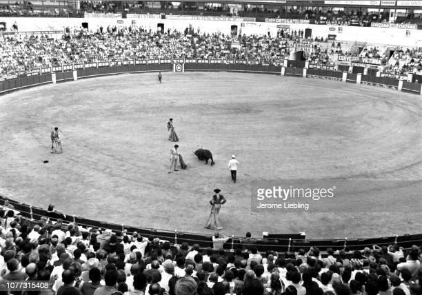 View of Spanish matador Manuel Benitez Perez in the bullring as he honors a fallen bull with his muleta cape Plaza de Toros de La Malagueta Malaga...