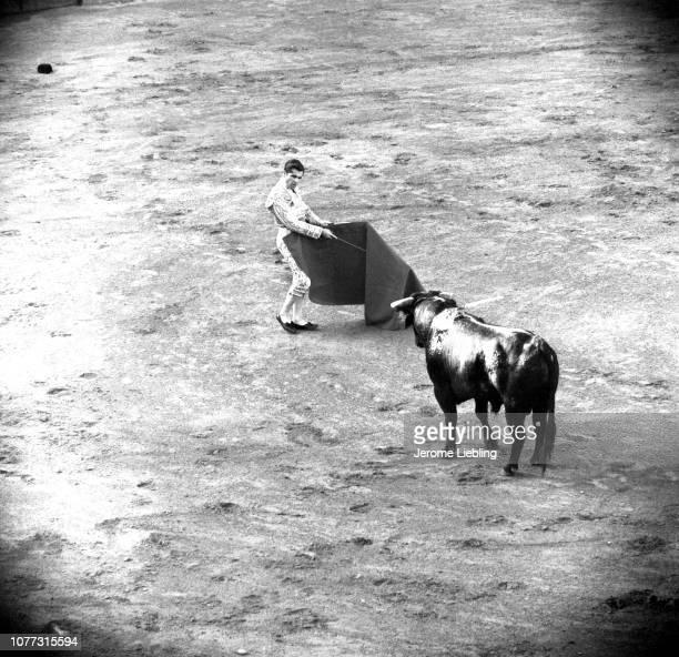 View of Spanish matador Pedro Martinez in the bullring as he subdues a bull with a muleta cape Plaza de Toros Marbella Marbella Spain September 1966
