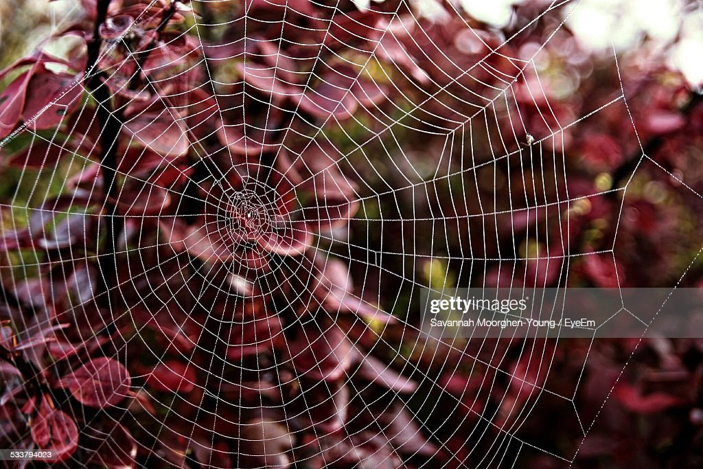 View Of Spiderweb In Forest : Foto stock