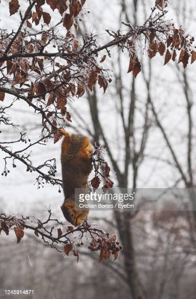 view of squirrel on tree branch - bortes stock pictures, royalty-free photos & images