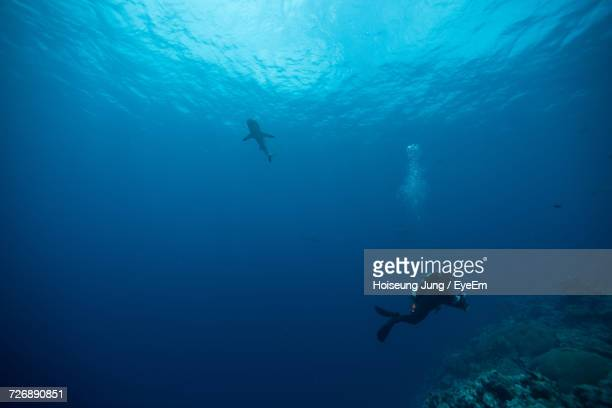 view of ssuba diver swimming in sea - fonds marins photos et images de collection