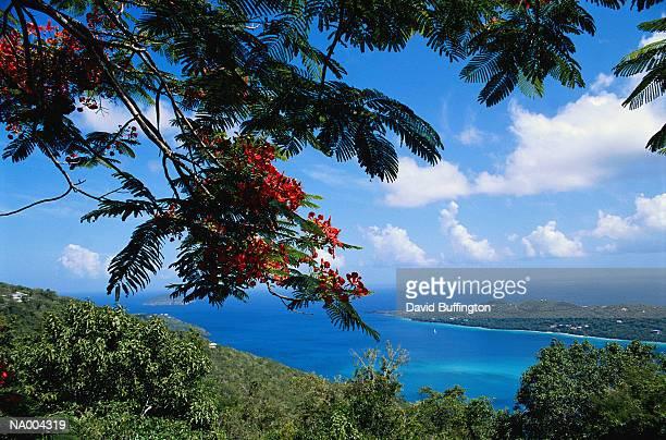 view of st. thomas - paisajes de st thomas fotografías e imágenes de stock