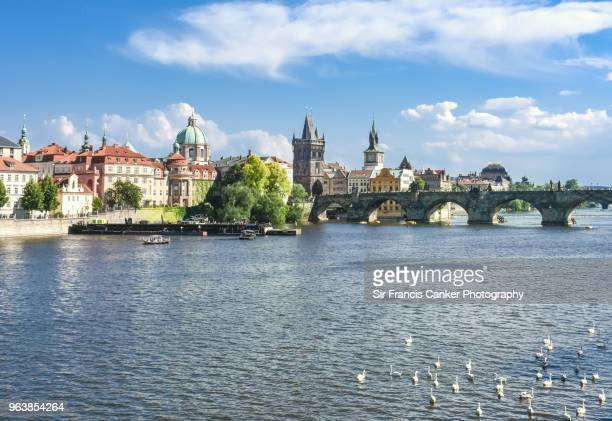 view of stare mesto (old town) of prague with swans swimming on vlatva river waterfront, prague, czech republic, a unesco heritage site - prag stock-fotos und bilder