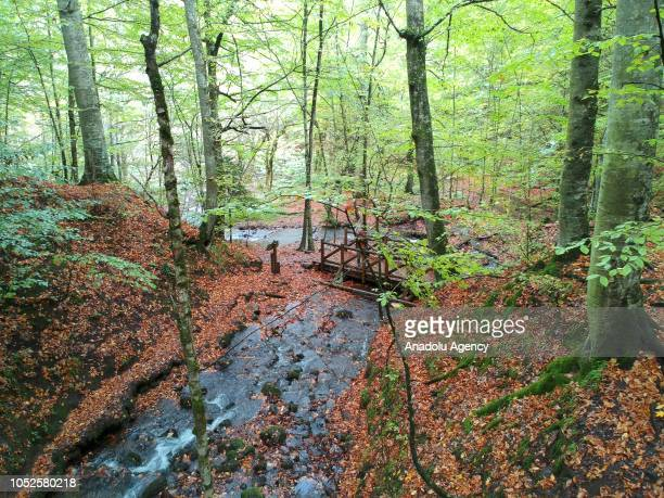 A view of stream amid trees during autumn season in Bolu province of Turkey on October 19 2018 Forests cover 65 percent of Bolu city as it hosts...