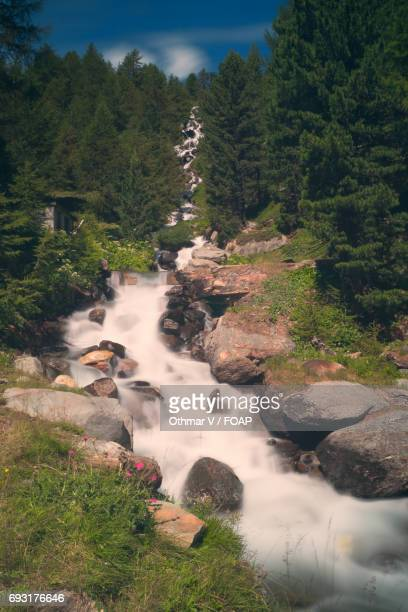 view of stream in martell valley, south tyrol, italy - martell valley italy stock photos and pictures
