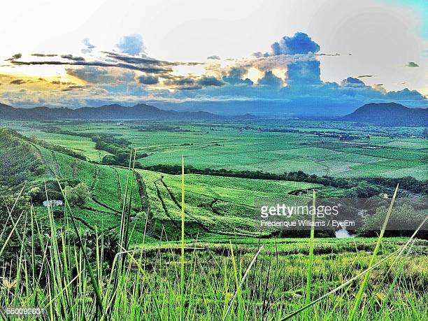 View Of Sugarcane Field Against Cloudy Sky