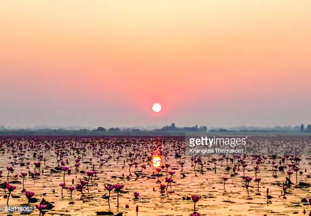 View of sunrise at Red Lotus Lake, in Udon Thani province, Thailand.