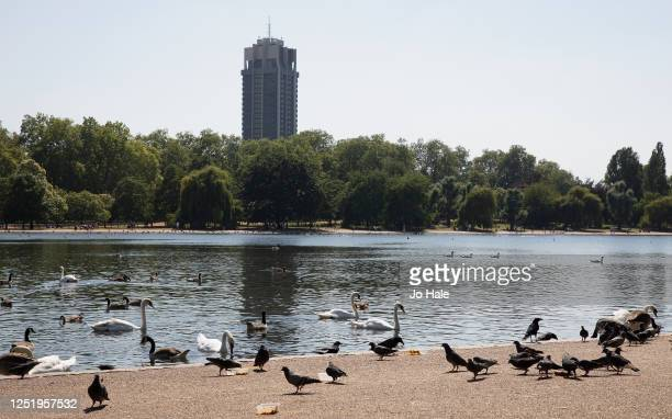 View of swans and pigeons eating from discarded take-away containers by the Serpentine in Hyde Park on a hot summer's day on June 24, 2020 in London,...