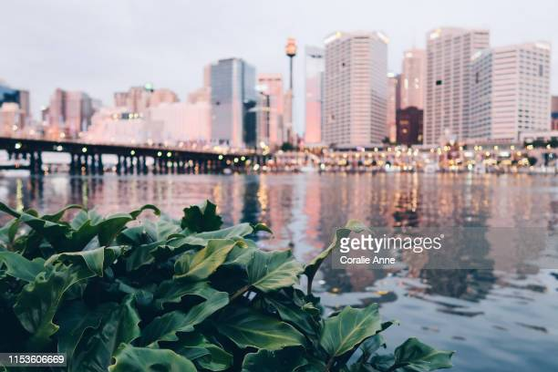 view of sydney skyline - darling harbour stock pictures, royalty-free photos & images