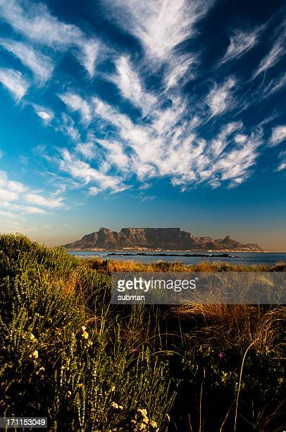 view of table mountain through fynbos - table mountain stock pictures, royalty-free photos & images