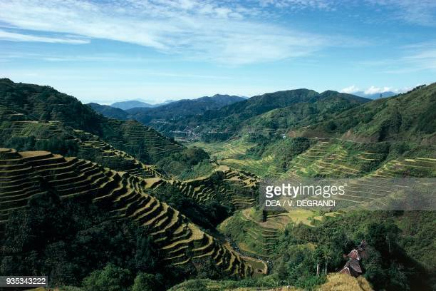 View of terraced rice fields in Banaue , Luzon island, Philippines.