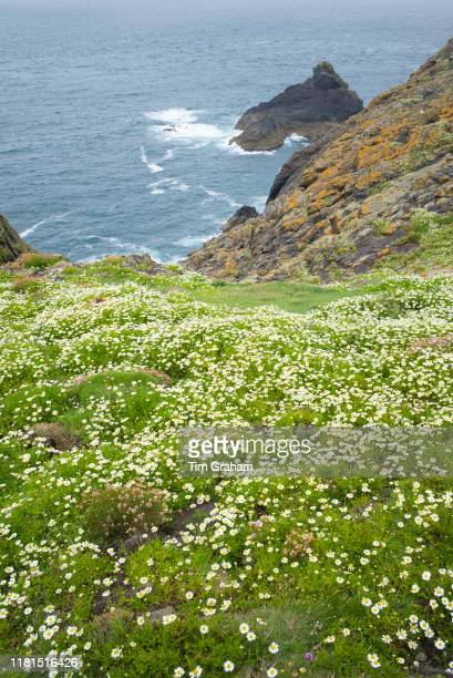View of the Atlantic Ocean from clifftop on Skomer Island National Nature Reserve South Wales United Kingdom