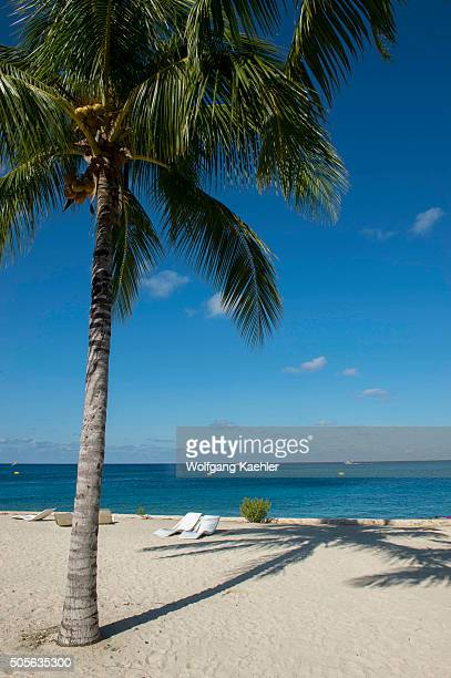 View of the beach with coconut palm tree at Cozumel Chankanaab National Park on Cozumel Island near Cancun in the state of Quintana Roo Yucatan...