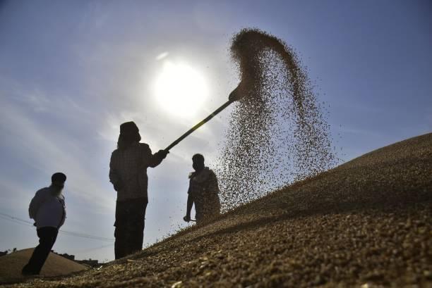IND: Grain Market In Punjab