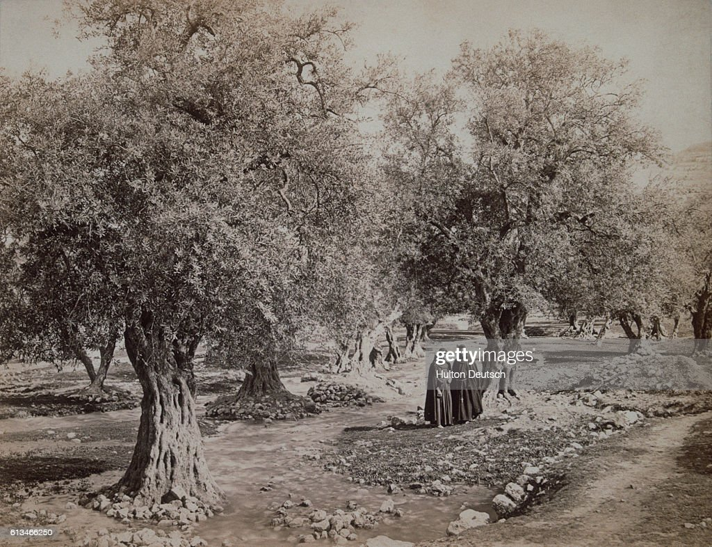 View Of The Brook Or Garden Of Gethsemane