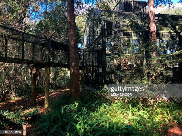 View of the cages and the elevated corridors that run among the trees in the Center For Great Apes a nonprofit sanctuary for orangutans and...
