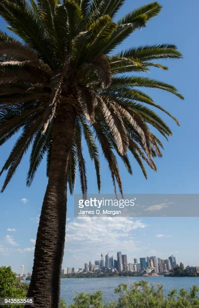A view of the city with a palm tree from the Lower North Shore suburb of Cremorne on April 9 2018 in Sydney Australia Sydney has been experiencing...