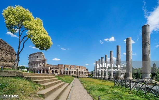 view of the colosseum from the temple of venus and roma on velian hill at the roman forum, rome, italy, june 28, 2018 - antica roma foto e immagini stock