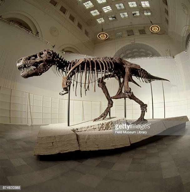 View of the completed and mounted fossil skeleton of Sue a Tyrannosaurus Rex at the Stanley Field Hall in the Field Museum Chicago Illinois May 8...