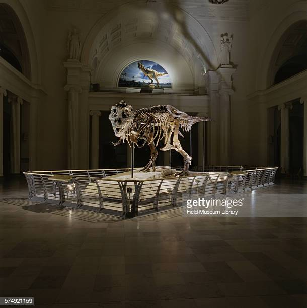 View of the completed exhibit installation of the fossil skeleton of Sue a Tyrannosaurus Rex seen in a darkened Stanley Field Hall at the Field...