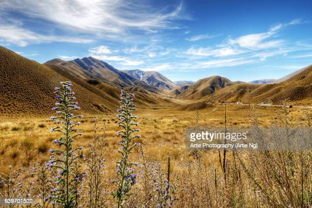 View of the Crown Range Summit in Otago, Wakatipu District, South Island, New Zealand